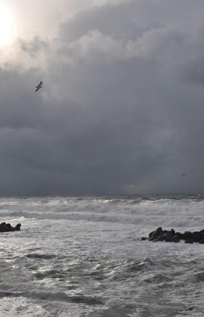 強風の中を飛ぶ海猫